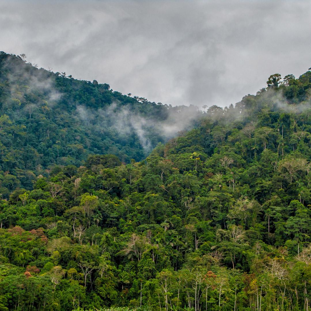 mist engulfs the rainforest of Peru's Amazon
