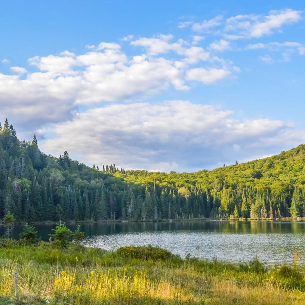 a serene lake scene in a park