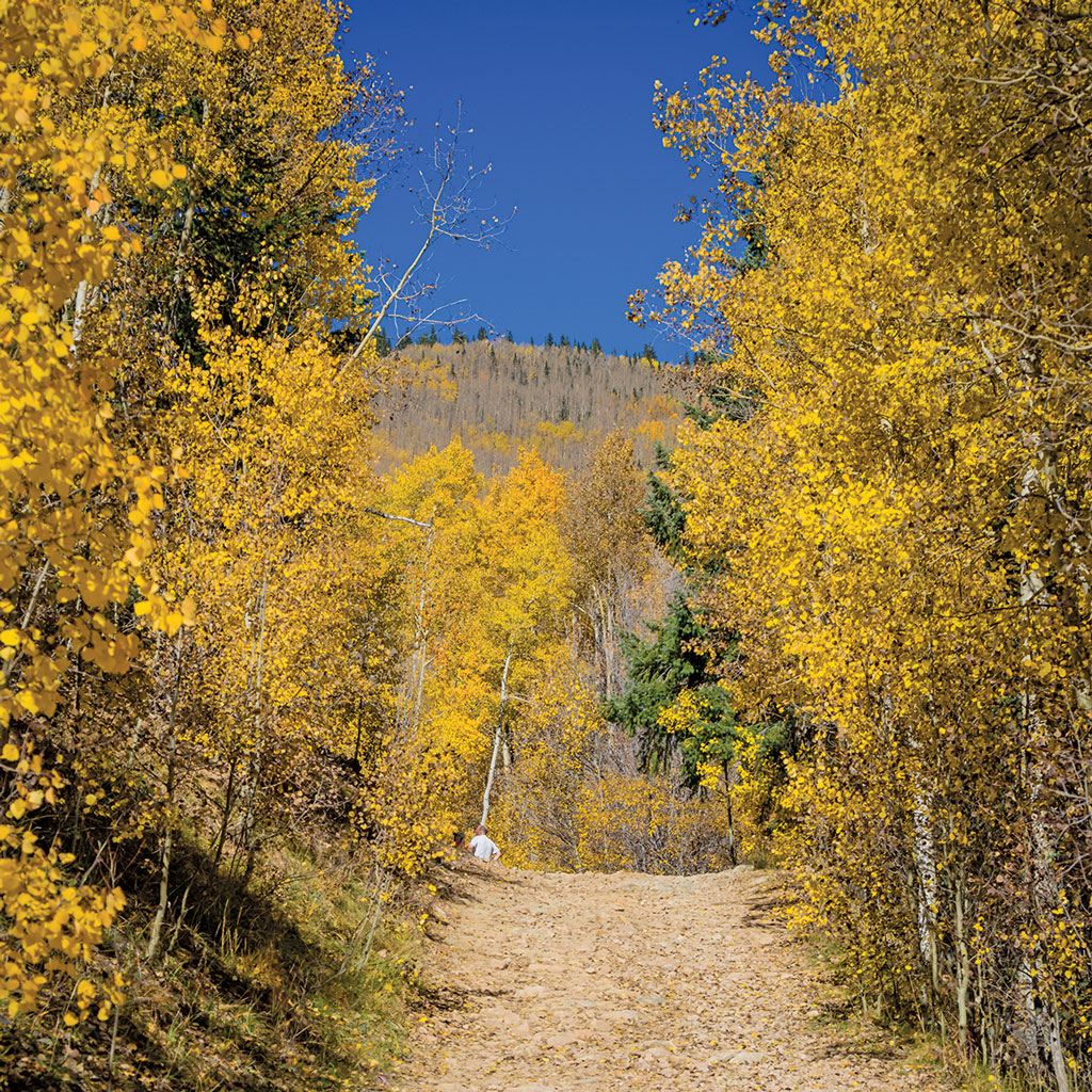 a hiking trail leads through yellow aspen leaves in Santa Fe
