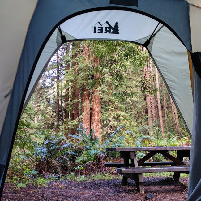 An interior shot from an open tent showcases a picnic table in a secluded and moist grove of trees.