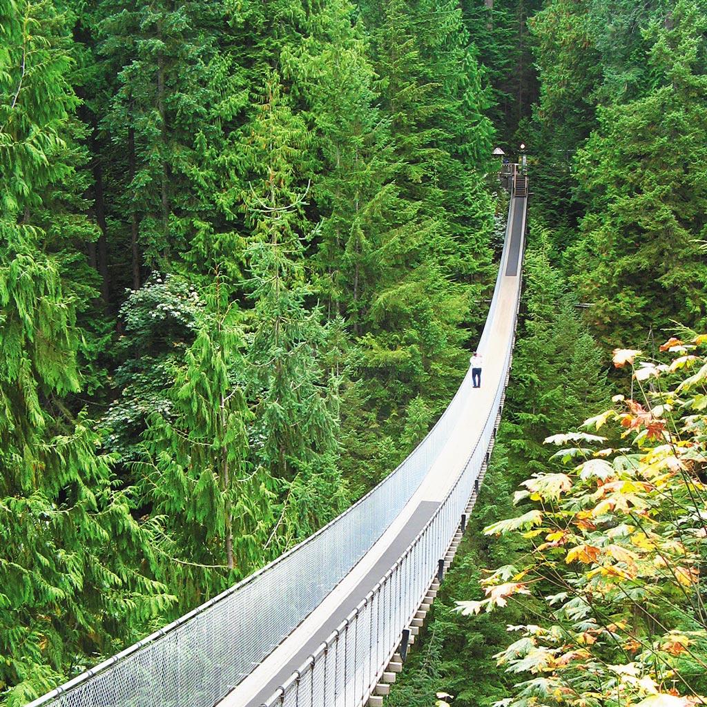 Capilano suspension bridge feeding through forest