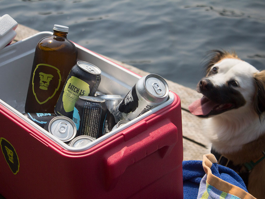 a dog smiles at an ice chest of Aslan Brewing Company beer