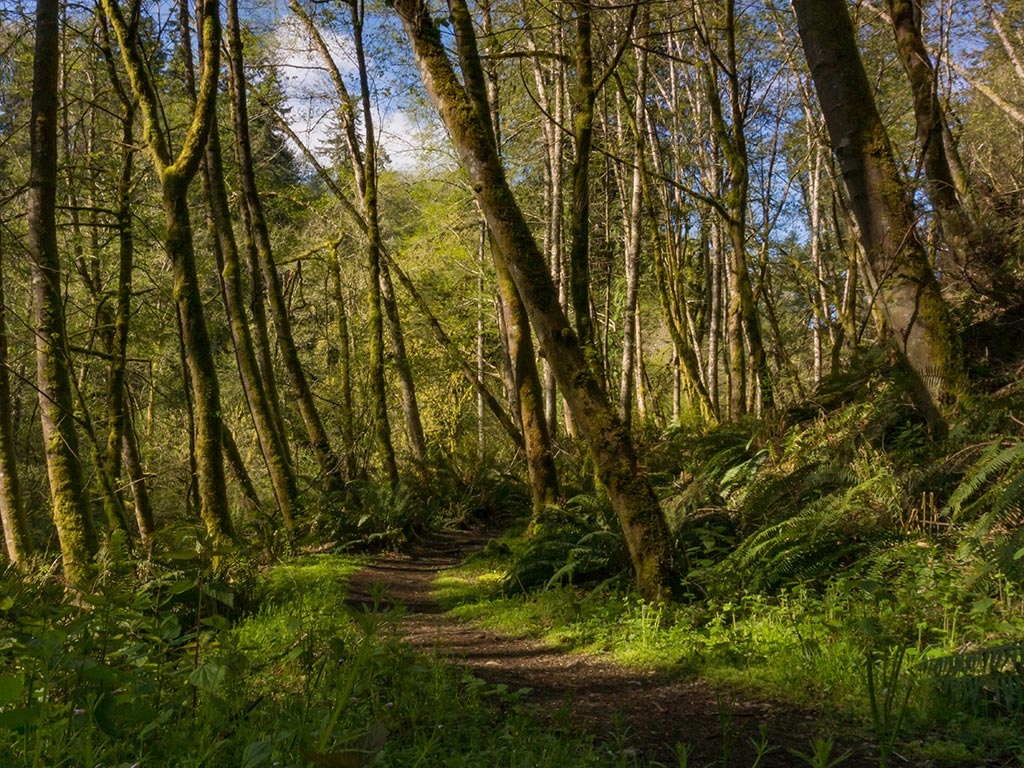 hiking trail through thick forest