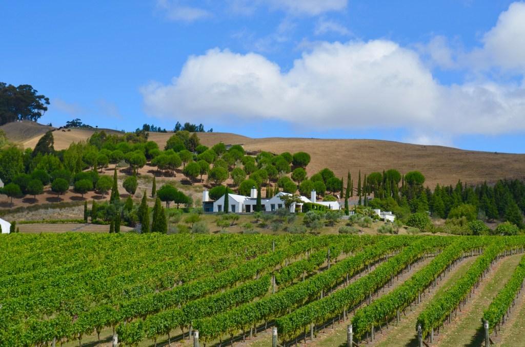 vineyard in hawkes bay new zealand