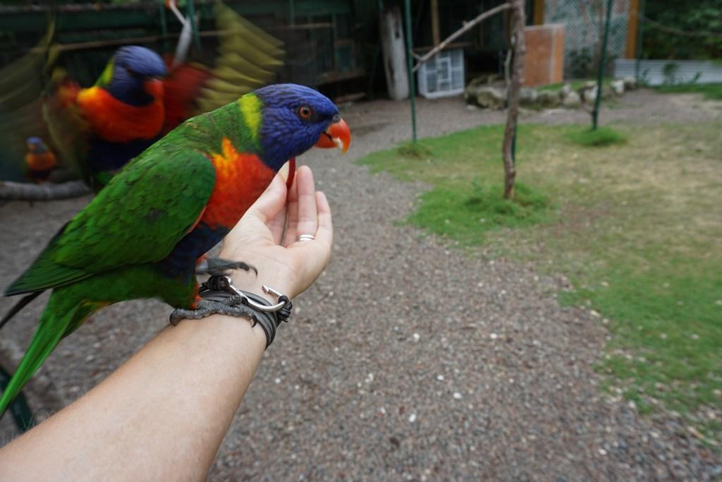 Lory Birds Ardastra