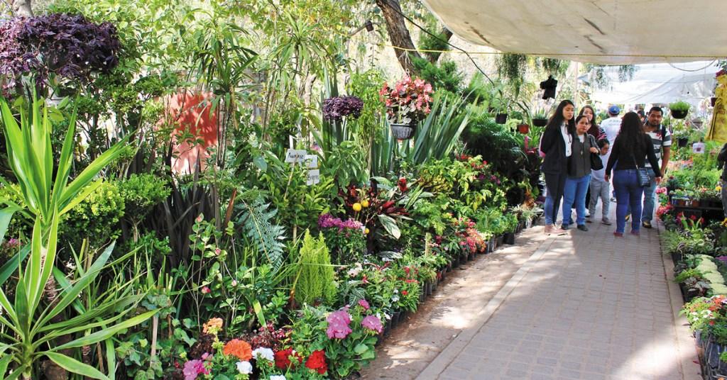 patrons in Parque Juarez perusing plant displays