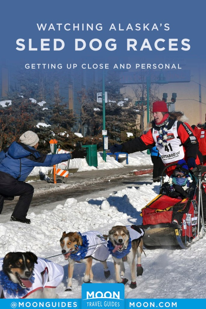 Woman being pulled by dogs on sled reaching out to spectator. Pinterest Graphic, Watching Alaska's Sled Dog Races.