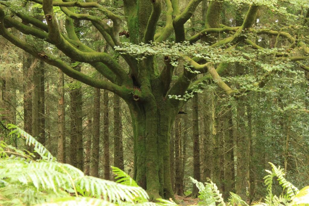 Forest of Brocéliande