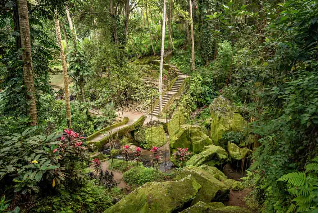 photo of monkey forest sanctuary surrounded by trees and stairs