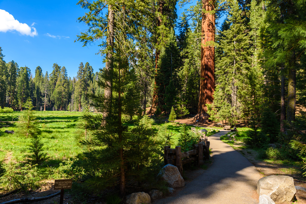 a walkway on the big trees trail