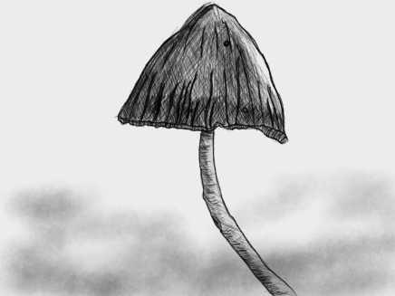 Mushroom_.jpg