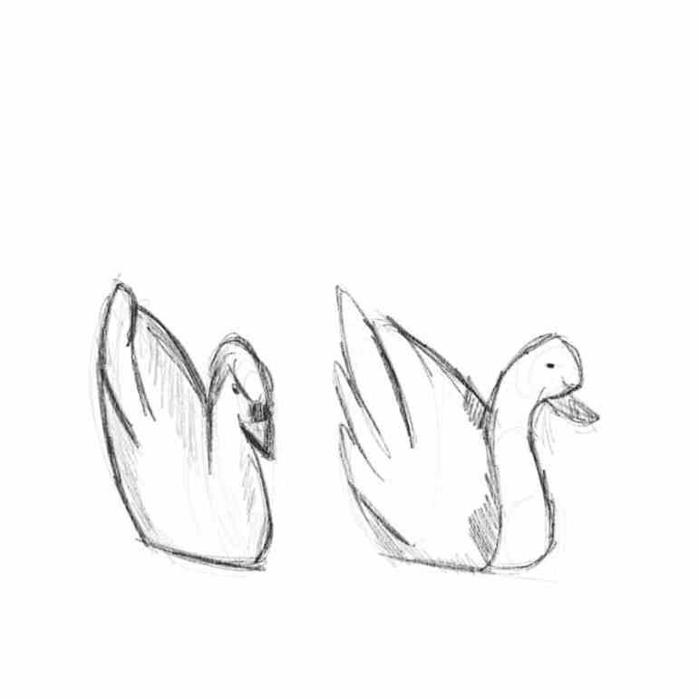 Swans_.jpg