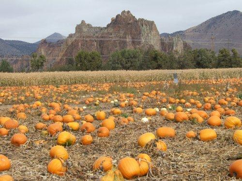 Central Oregon Pumpkin Company - and Smith Rock
