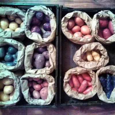 Rainshadow Organics potatoes