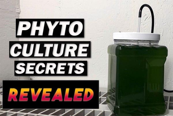 Phytoplankton Culture