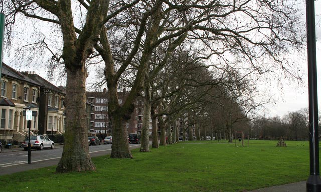 plane trees along Gascoyne Road, Well Street Common, Hackney.