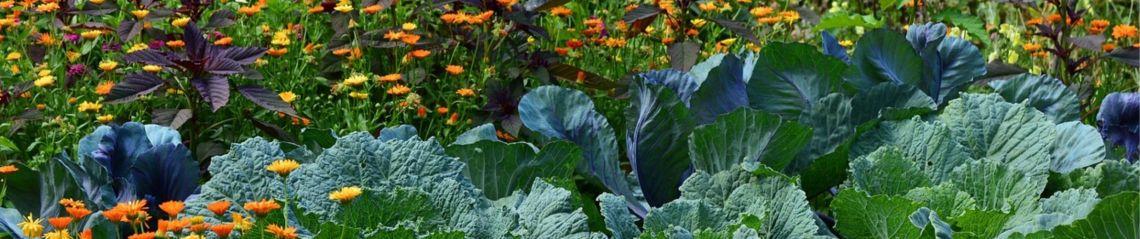 Agriculture naturelle, permaculture, variétés anciennes, agroécologie, semences paysannes