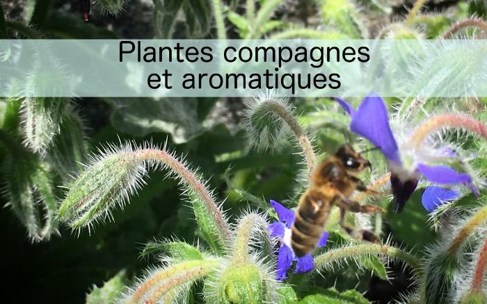 Plantes compagnes et aromatiques bio, potagers, brest, saint renan, Hadenn
