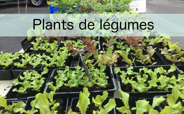 Plants de légumes bio production locale et vente sur place et marché de Saint Renan, près de Brest, Finistère
