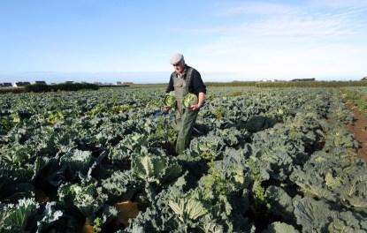 kaol kozh, semence paysanne, plants bio, hadenn, brest, potager bio, jardinage