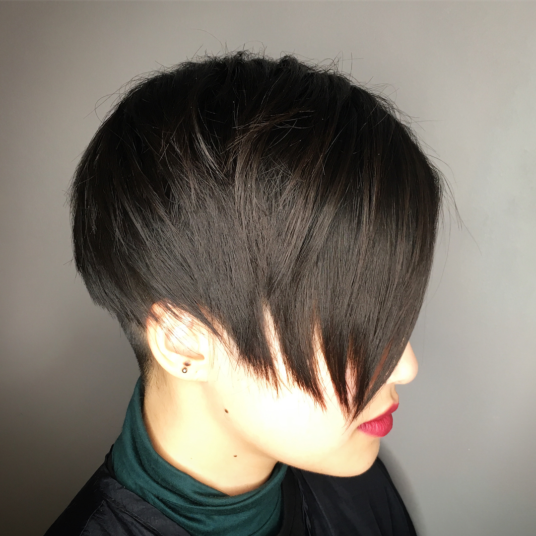Smooth Dark Brown Pixie Bob