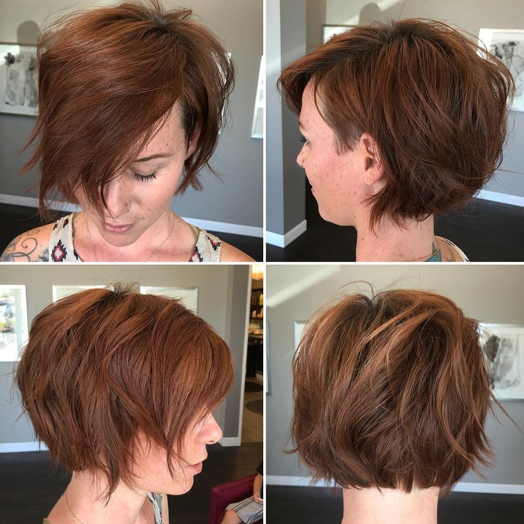 Cinnamon Brown Pixie Bob