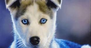 Köpek ve Leopar-Diplomasi