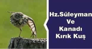 Hz. Sülayman (A.S.) ve Kanadı Kırık Kuş