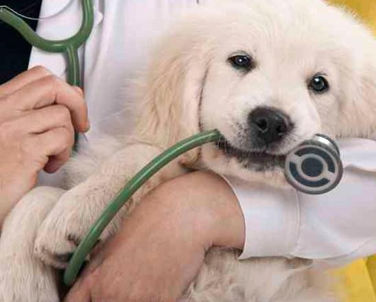 La formulación magistral en veterinaria (2010)