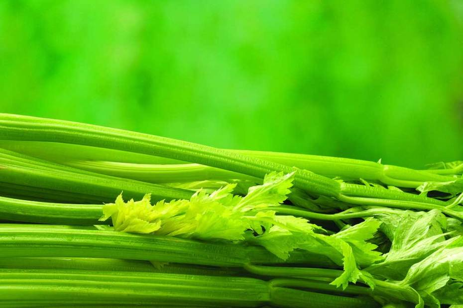 CO2 extraction process of celery seed oil