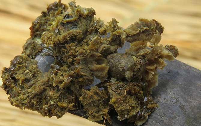 Supercritical carbon dioxide extraction of propolis