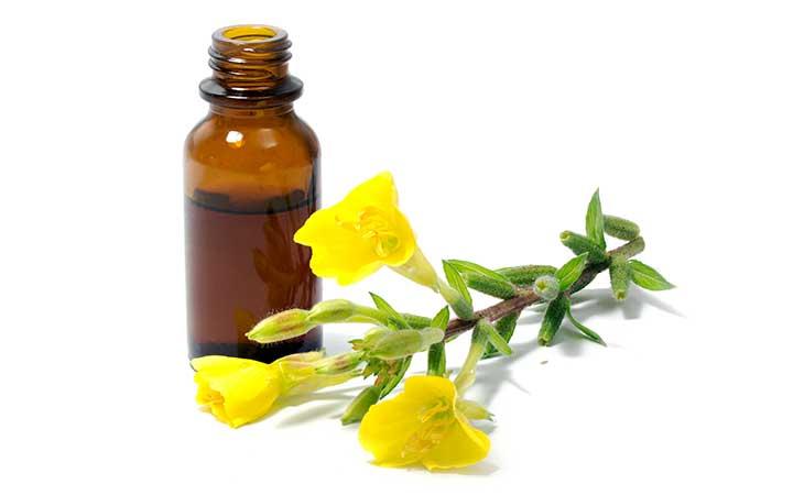 Evening Primrose and Evening Primrose Oil