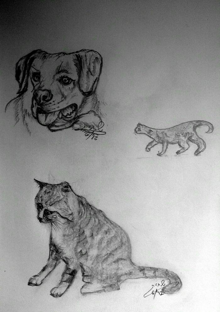 cat+dog+pencil_drawing