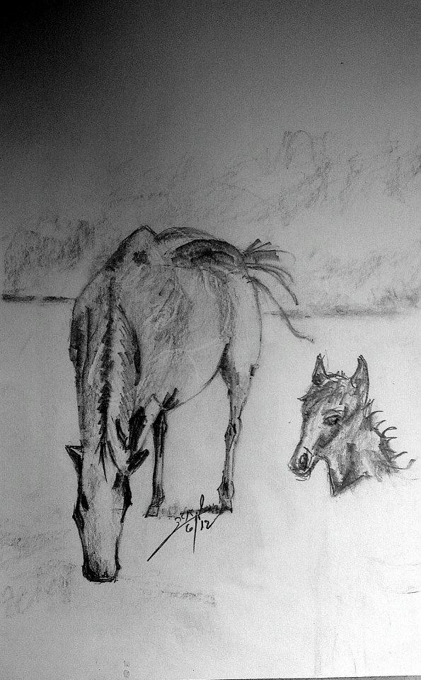 horse_pencil_drawing