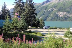 View RV fireweed