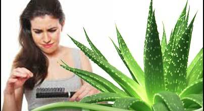10 Ways You Can Use Use Aloe Vera For Faster Hair Growth