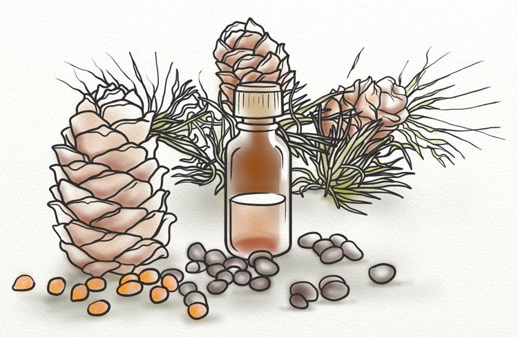 Cedar wood pines and a bottle of oil