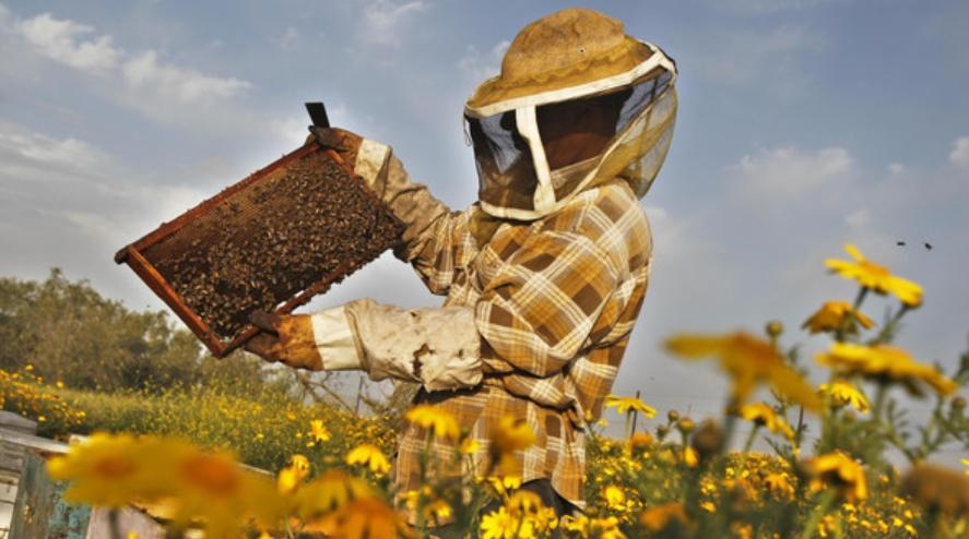 How to Harvest Honey
