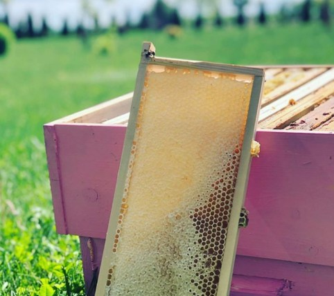 Remove honeybees from the hive