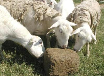 Mineral Blocks for Sheep