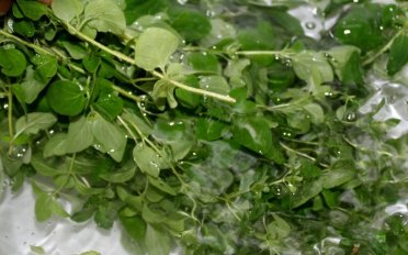 Rinse the oregano stems
