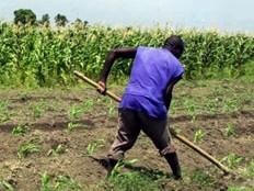 Haïti - Agriculture : L'exode des jeunes du milieu rural