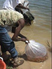 Haïti - Reconstruction : Michel Martelly aujourd'hui à Pandiassou