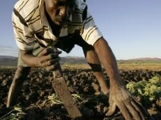 Haïti - Agriculture : Le point sur la sécurité alimentaire jusqu'en décembre 2011