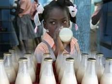 Haïti - Agriculture : Bientôt du lait pour 3000 enfants
