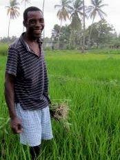 Haïti - Agriculture : Les agronomes taïwanais aux côtés des riziculteurs haïtiens