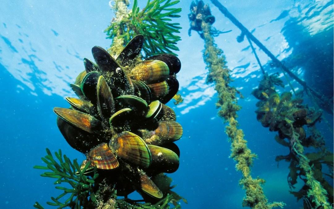 Green Lipped Mussel Oil vs Green Lipped Mussel Powder