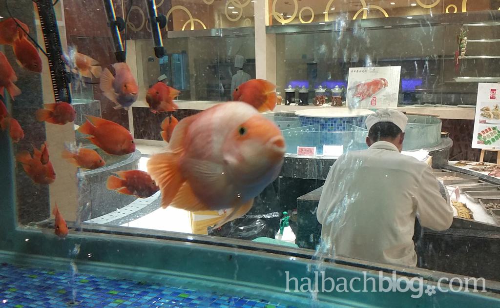 halbachblog: Halbach Seidenbänder - Impressionen von der Chinareise im Frühling 2016, Fische im Restaurant-Aquarium