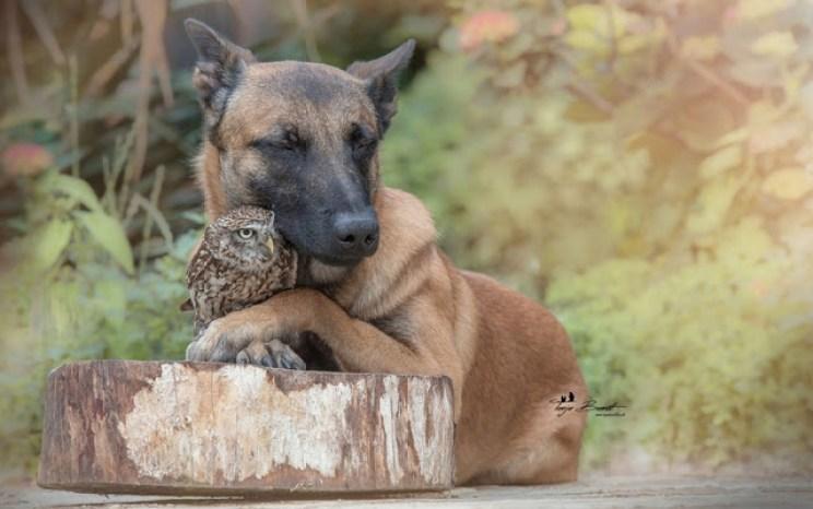 La amistad entre Ingo el perro y Poldi el buho