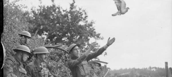 Halcones nazis vs palomas